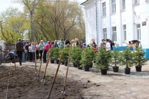 Пришкольный участок АСОШ №2 пополнился деревьями